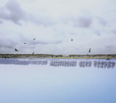 birds23_4